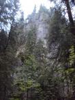 Dol.Kościeliska.Skalny las,czy leśna skała