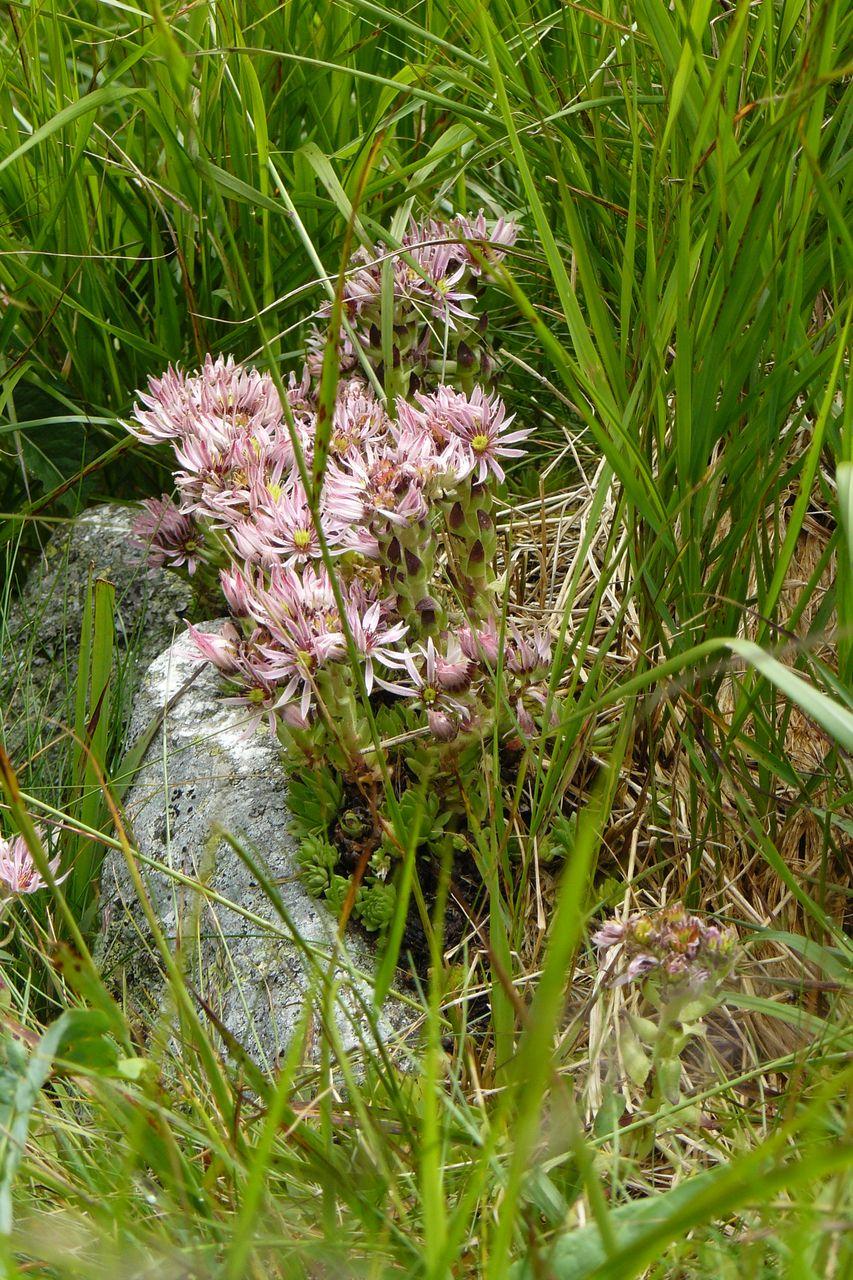 Flora  Tatr Wysokich