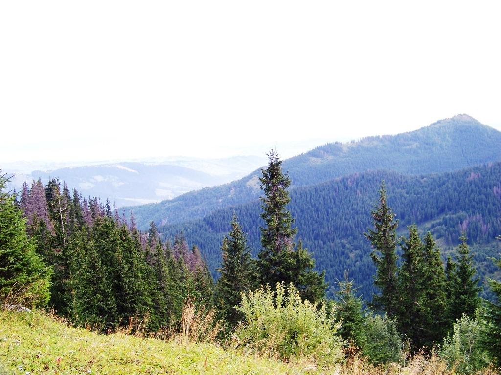Krajobraz reglowy