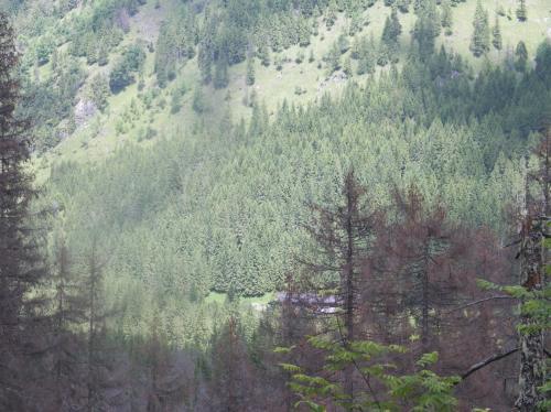 Leśniczówka za drzewami