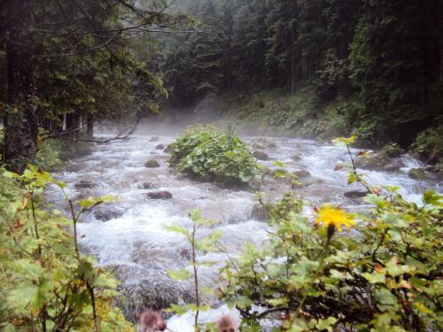 Mgiełka nad potokiem w dol.Kościeliskiej.