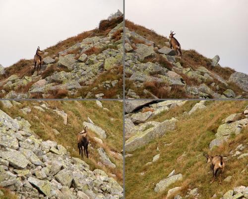 Na zboczach Koziego Wierchu