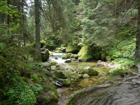 Potok Kościeliski