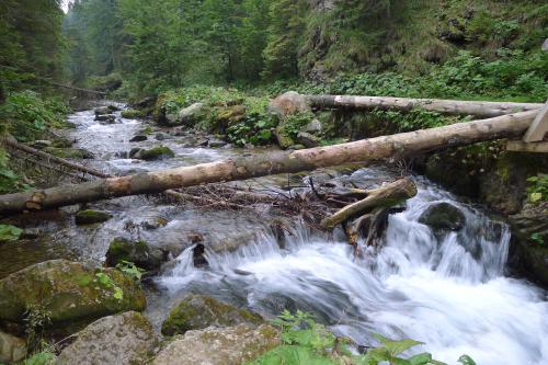Potok Olczyski w Dolinie Olczyskiej