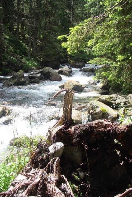 Potok Roztoka za Wodospadem Mickiewicza