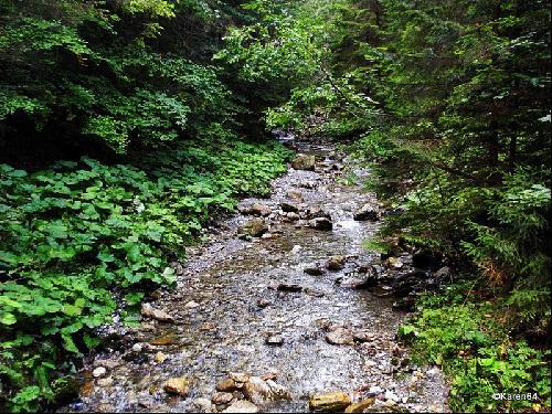 Potok Strążyski w Dolinie Strążyskiej w Tatrach Zachodnich