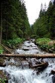 Potok w Dolinie Olczyskiej