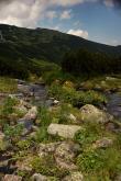 Potok w Zielonej Gąsienicowej