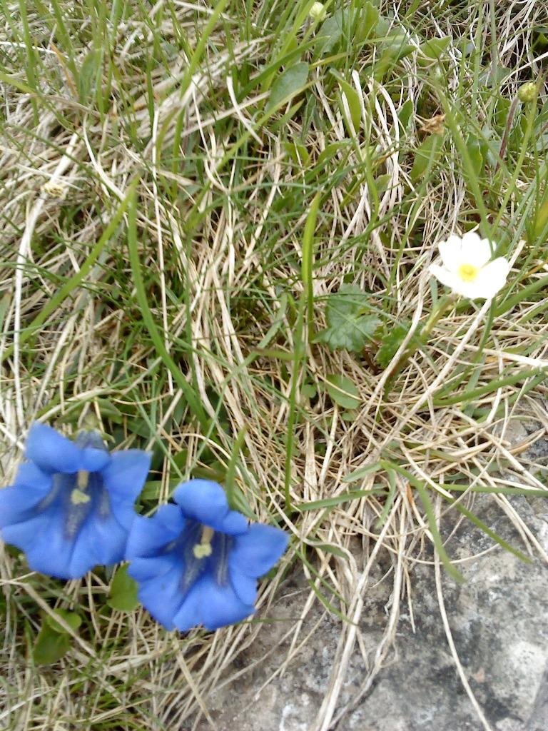 Roślinność tatrzańska w Dolinie Jaworzynki