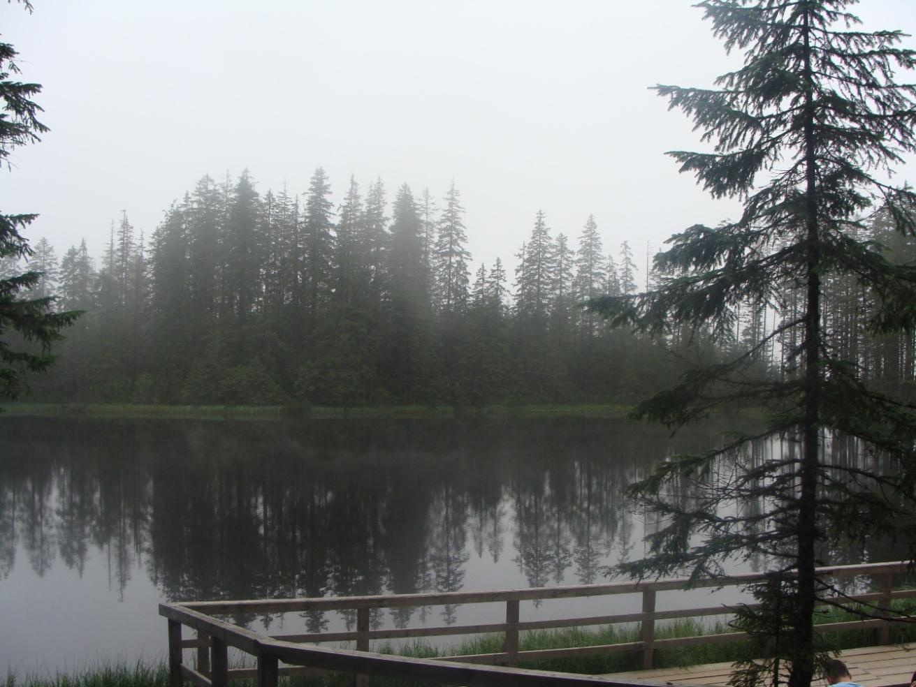 Smreczyński Staw we mgle.