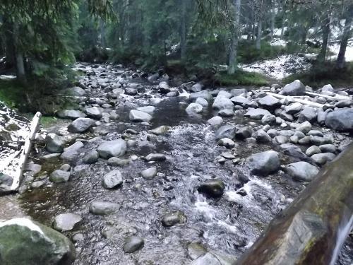 Sucha Woda przy polanie Psia Trawka