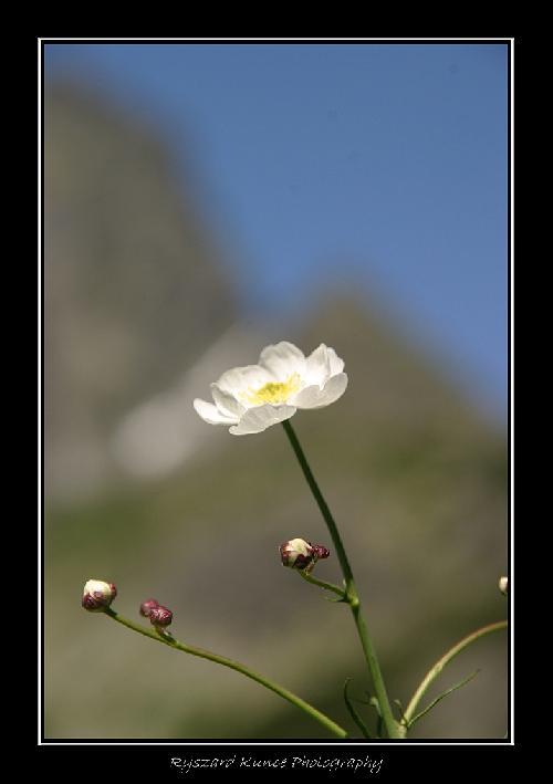Tatrzańska roślinność