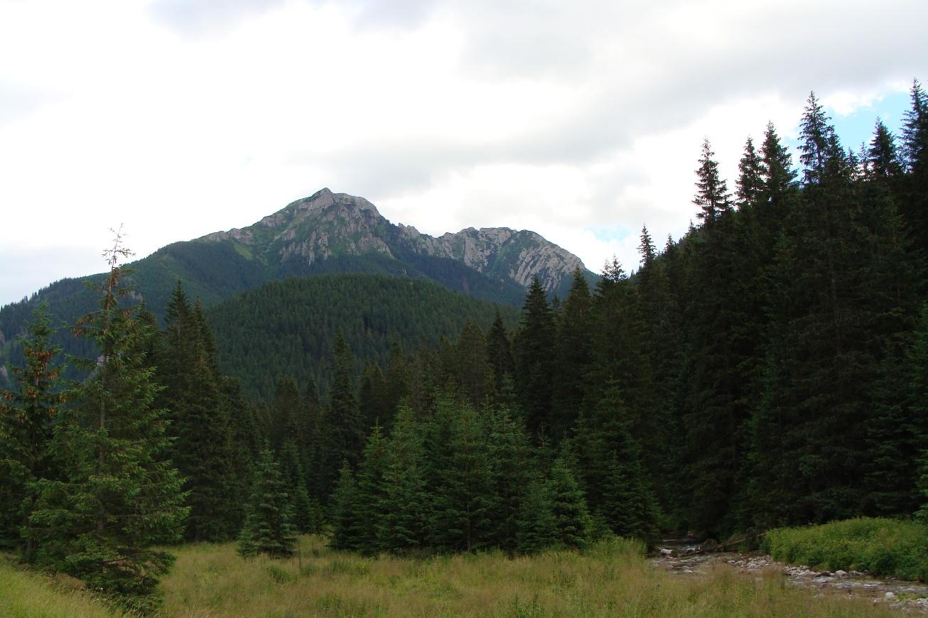 Wapienny szczyt nad Chochołowską Doliną