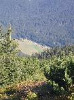 Widok z Grzesia na Dolinę Chochołowską