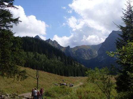 Wielka Polana w Dolinie Małej Łąki