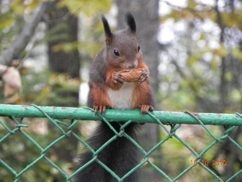 Wiewiórka pod Skocznią
