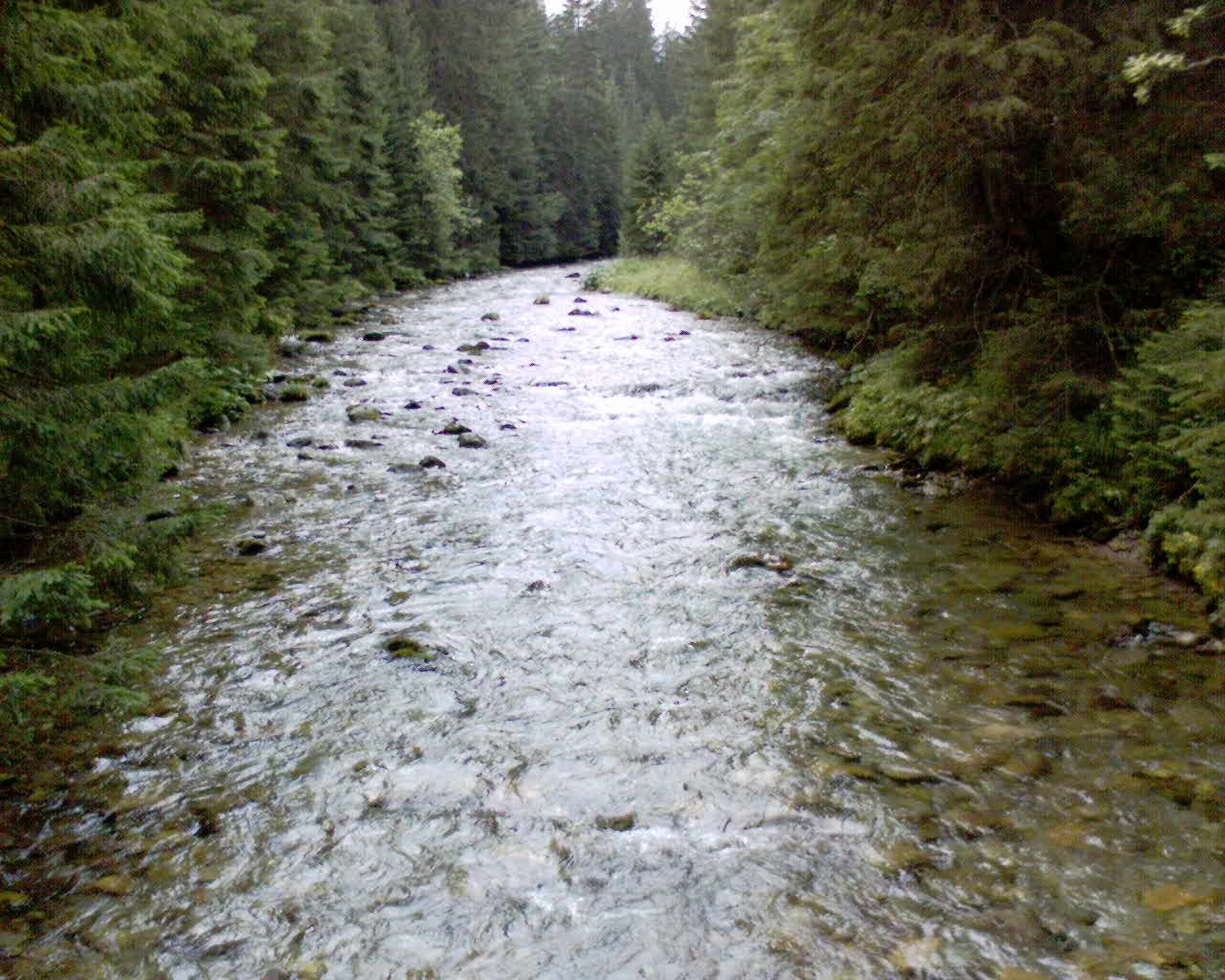 potok w dolinie chocholowskiej